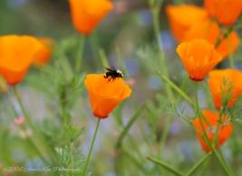 BeeAutiful Bee