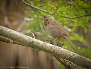 Bird edited 2015
