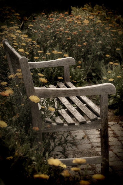 Bench & Daisies at South Coast Botanical Gardens