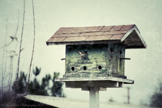 sf-bird-house_Snapseed
