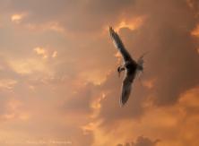 Tern Skysf-Edit