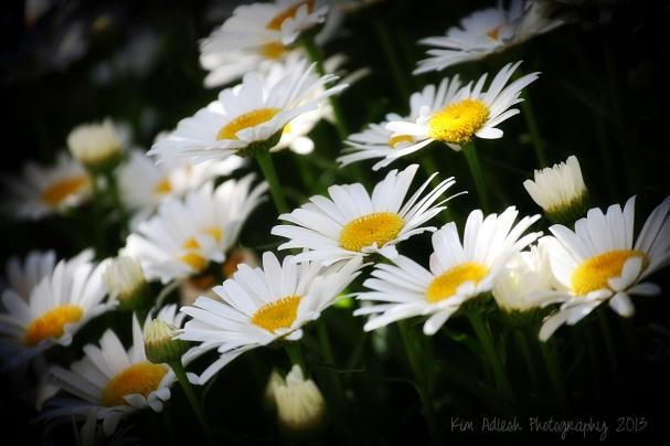 I <3 Daisies