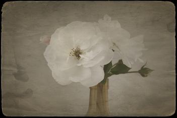 Rose Vase Antiqued5sf