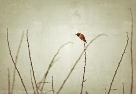 MoodyHummer shot_Snapseed