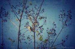 SpringBirdieHDRsf_Snapseed