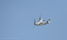 An Osprey Flew Overhead :)