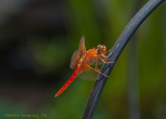Dragonfly2sf