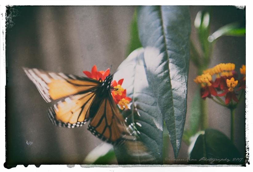 Flutter By MonarchSF