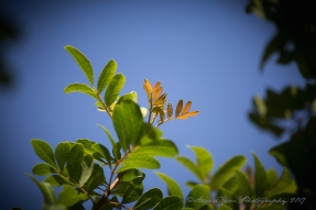 NewGrowth2