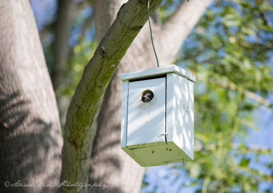 BabyBluebird2sf