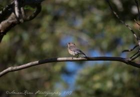 WBluebird2sf
